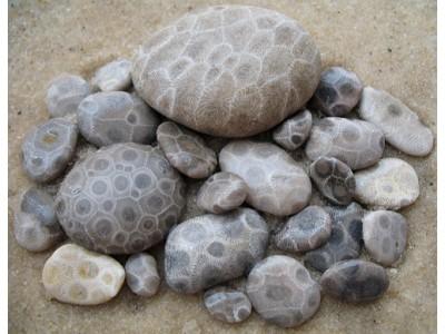 Окаменелый коралл или камень Петоски