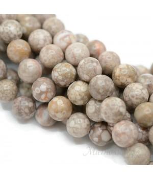 Окаменелый коралл(камень Петоски) 8мм, 10 штук